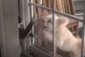 Best FUNNY CAT videos 2020