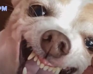 Funny Dog Videos 2020 - It's time to LAUGH with Dog's life