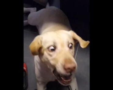 Funny Dog TikToks Have Taken Over My Algorithm - Tiktok dog compilation