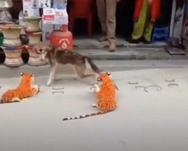 Funniest Pranks On Dogs & Cats - TRY NOT TO LAUGH - Funny Pets