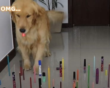 Obstacle Challenge CAT vs DOG - Funny Dog and Cat