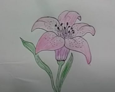 How to draw a lily flower Step by Step - Flower Drawing easy for Beginners