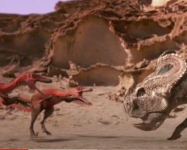 Protoceratops VS velociraptors (dinosaures) - Great war dinosaur