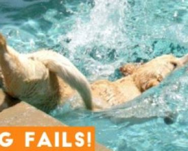 Funniest Dogs Fail Compilation 2021 - Funny Pet Videos