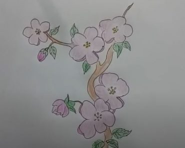 How to draw Cherry Blossoms Step by Step