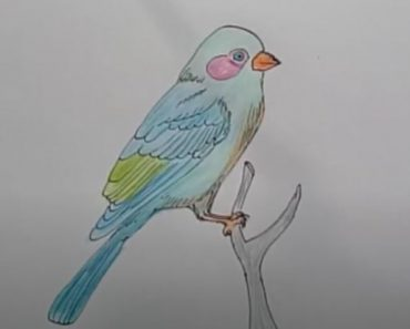 How to draw a bluebird step by step - Bird Drawing easy for beginners