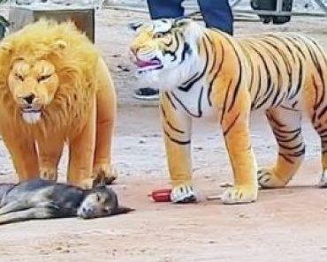 Troll Prank dog & fake Lion and Fake Tiger Prank To dog - funny dog videos
